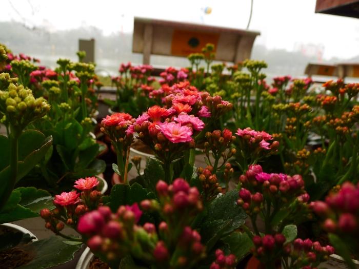 Flowers by K.