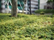 Greenary by Hải