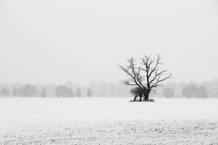 The White Landscape – Captured By Danny Prusseit